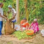 Intercrop Brinjal providing excellent returns..! #OrganicFarming