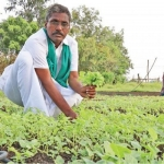 ₹10,83,000 Annual profit... Green farm in 10 acres of land..!