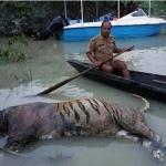அஸ்ஸாம் வெள்ளம்; காசிரங்காவில் 253 விலங்குகள் பலி!