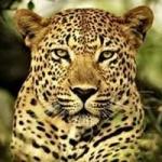 நேற்று கரடி.. இன்று சிறுத்தை... அச்சத்தில் மேற்குத் தொடர்ச்சி மலை விவசாயிகள்!