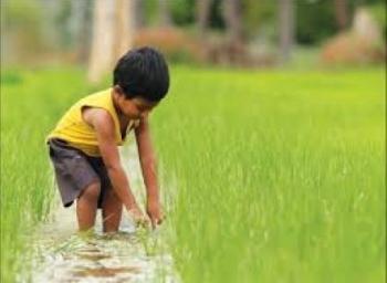 ஆர்கானிக் பொருள்களுக்கு அரசு தரும் சான்றிதழ்... எப்படிப் பெறுவது? #OrganicFarming