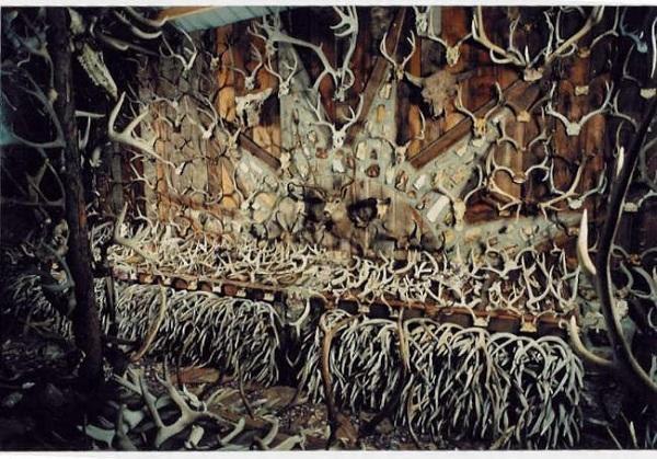 மான் கொம்புகளை சேகரிக்கும் மனிதர்