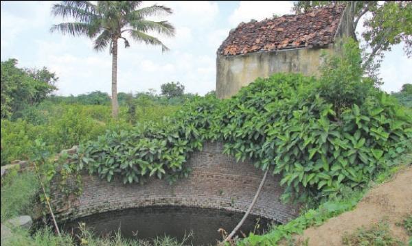 Rajendran's farm
