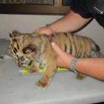சர்வதேச அளவில் கடத்தப்படும் விலங்குகளும் சில வில்லங்க ஐடியாக்களும்..! #AnimalTrafficking