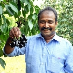 ₹5,00,000 per acre... Black plum cultivation is highly profitable!