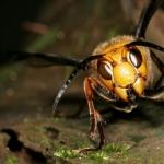 மனிதர்களின் உடலுக்குள் முட்டையிடும் பூச்சி... உடலைத் துளைத்து வெளியேறும் புழு!