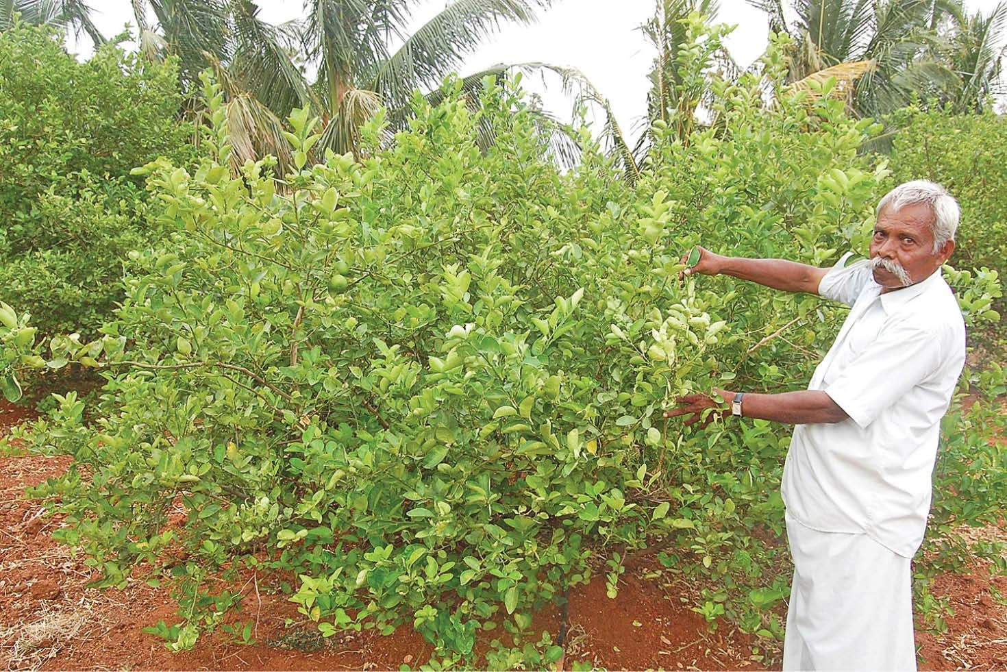 most profitable trees to grow in india