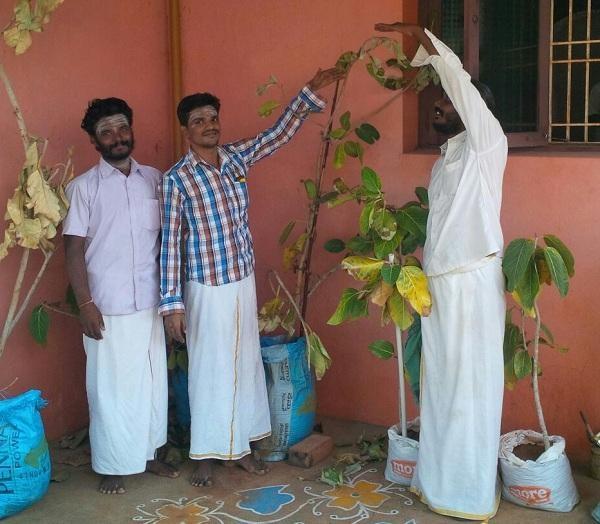 ருத்திராட்ச மரம்