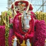 கன்னியாகுமரி பகவதி அம்மனின் நவராத்திரி பரிவேட்டை..!