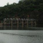 பாசனத்துக்காக நான்கு அணைகள் அக்டோபர் 5-ல் திறப்பு: முதலமைச்சர் உத்தரவு