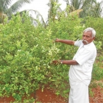 300 trees with ₹ 7 lakhs income... Grow lemons grow rich!