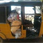 கன்னியாகுமரியில் 400கிலோ ரேஷன் அரிசி பறிமுதல்..!