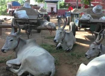 மணல் கொள்ளையில் அரசியல் கட்சியினர்; கொந்தளிக்கும் அரியலூர் மக்கள்
