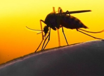 டெங்குவிலிருந்து குடும்பத்தைக் காக்க கட்டாயம் செய்ய வேண்டியவை...! #DengueAlert
