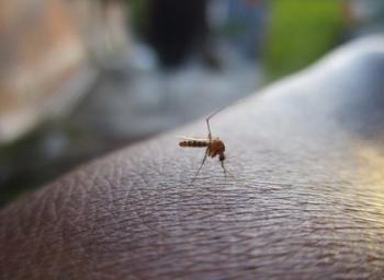 2.5 கிராம்தான்... ஆனால் மனிதனுக்குப் பாம்பை விட ஆபத்தான உயிரினம் இது!