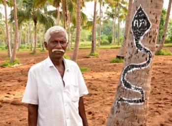 குரங்குகளை விரட்ட பாம்பு பெயின்டிங்... சிங்கம்புணரியில் ஒரு மேஜிக்! #VikatanExclusive