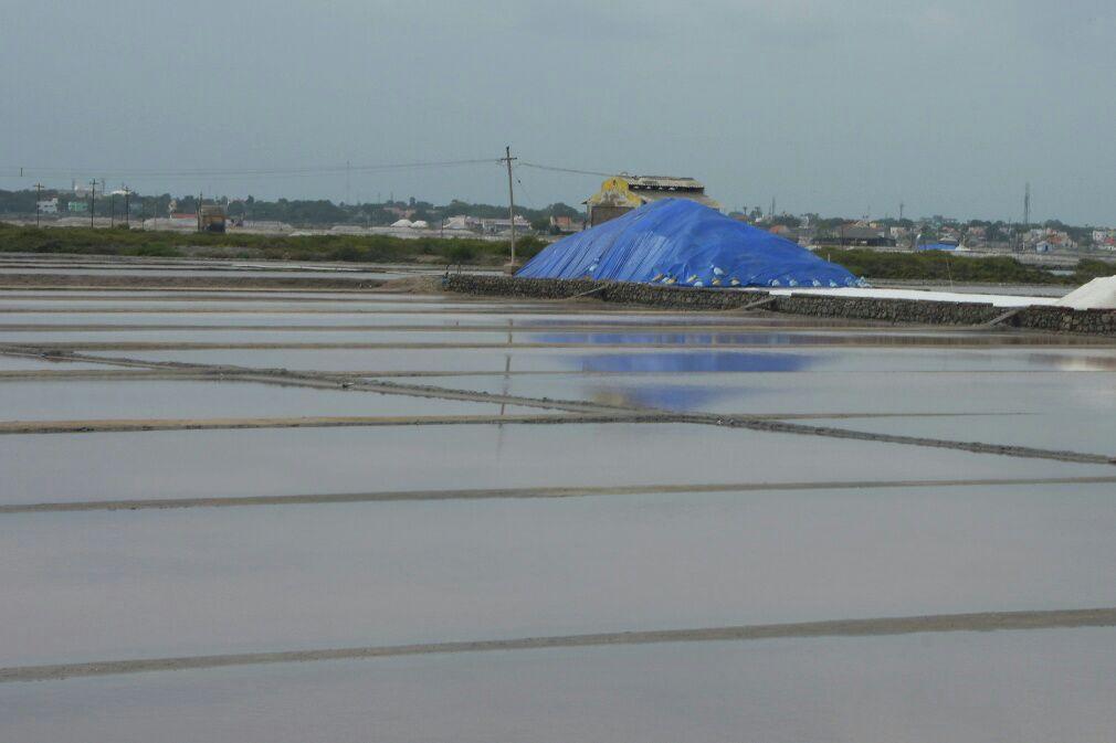 salt production affected by rains