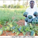 1 acre…75 days…₹1.7 Lakhs... Easy and more returns from Water Melon!
