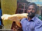 ராட்சத காளான்... கிலோ 300 ரூபாய்!