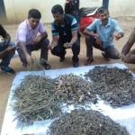 ராமநாதபுரத்தில் அரியவகை கடல்வாழ் உயிரினங்கள் பறிமுதல்!