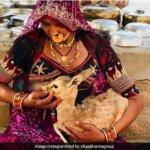 ''தாய்மையின் உன்னதத்தை இந்தியாவில்தான் கண்டேன்'' - நெகிழும் புகைப்படக் கலைஞர்