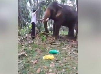 பாகுபலி ஸ்டைலில் யானைக்கு முத்தம் கொடுத்தவருக்கு நேர்ந்த கதி! #ShockingVideo