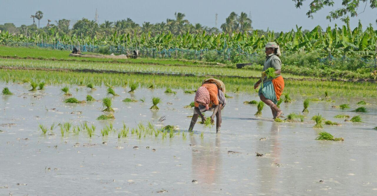 Agricultural activities in Thoothukudi district
