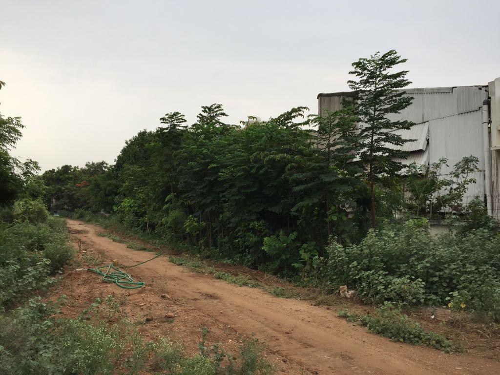 மியா வாக்கி