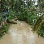 குமரி மாவட்டத்தில் வெள்ளத்தில் சிக்கி 25 பசுக்கள் உயிரிழப்பு!