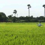 ஐந்து வருடம் இல்லாத மழை இந்த ஆண்டு பெய்துள்ளது..! கரூர் மக்கள் ஆனந்தம்
