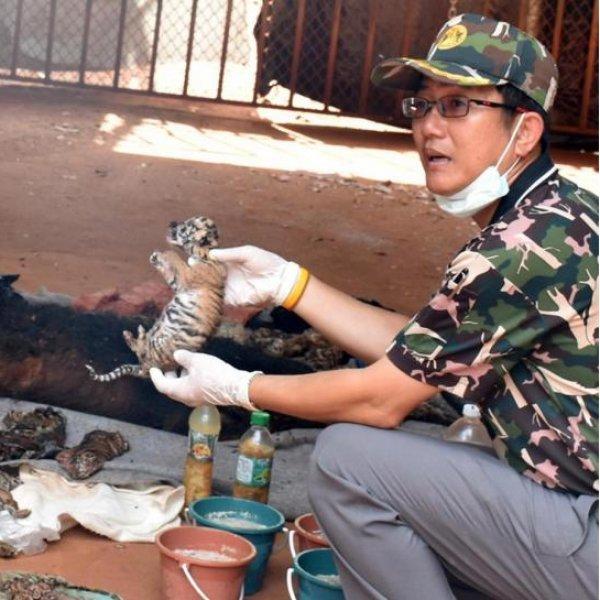 துணிந்து செல், துப்பாக்கி எடு, கடந்து செல்..! புலிகளைக் கடத்துபவர்களின் வியூகம் #AnimalTrafficking - அத்தியாயம் 5