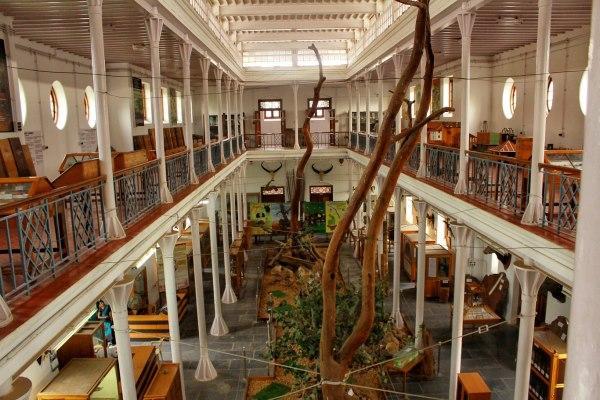 gass forest museum