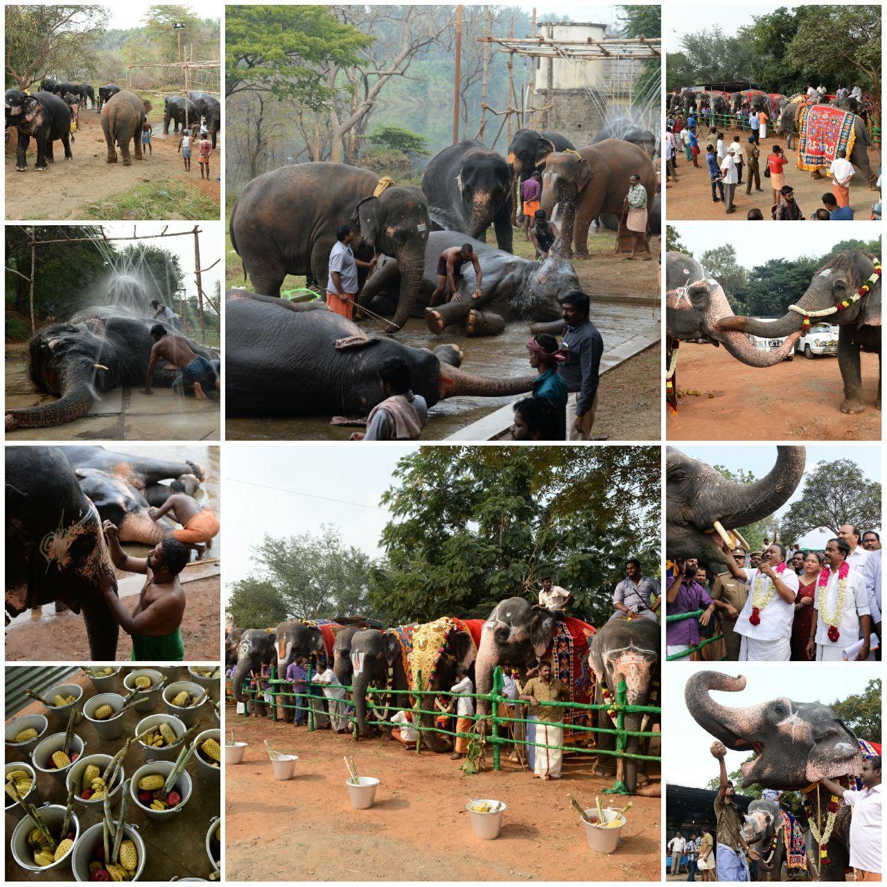 யானைகள் நல வாழ்வு முகாம் 2018