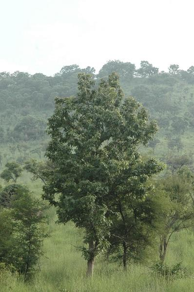 ஈசன் மலை