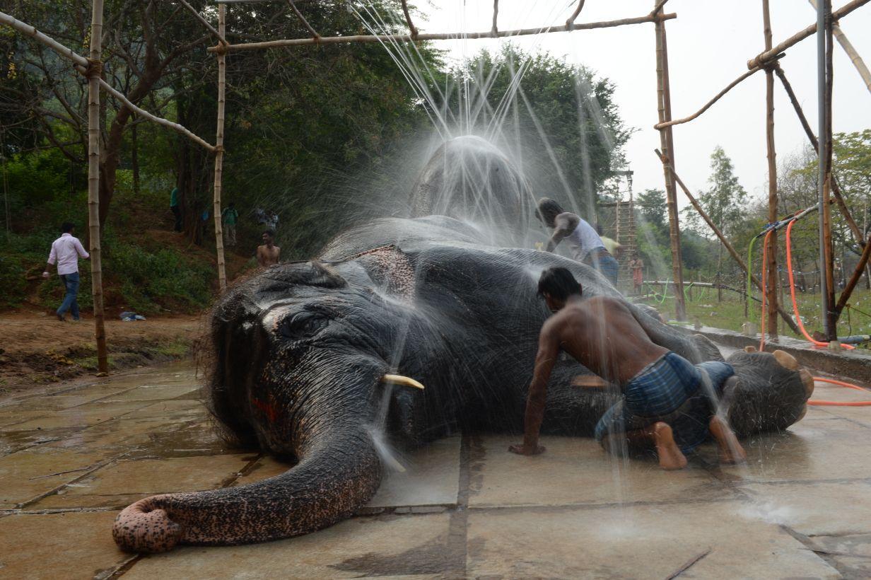 Elephants ate coimbatore camp