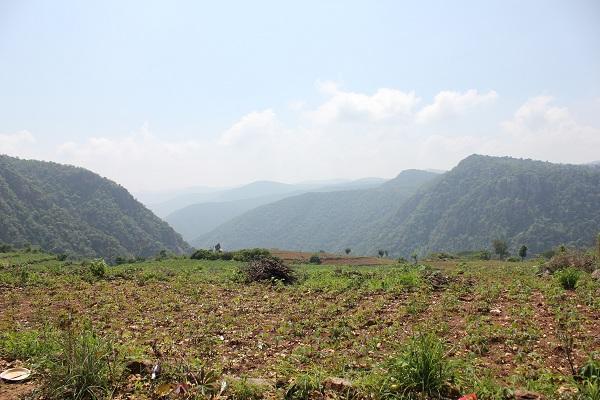 pachamalai