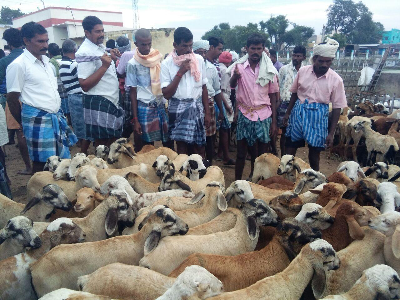 sheep selling in ettayapuram sheep market