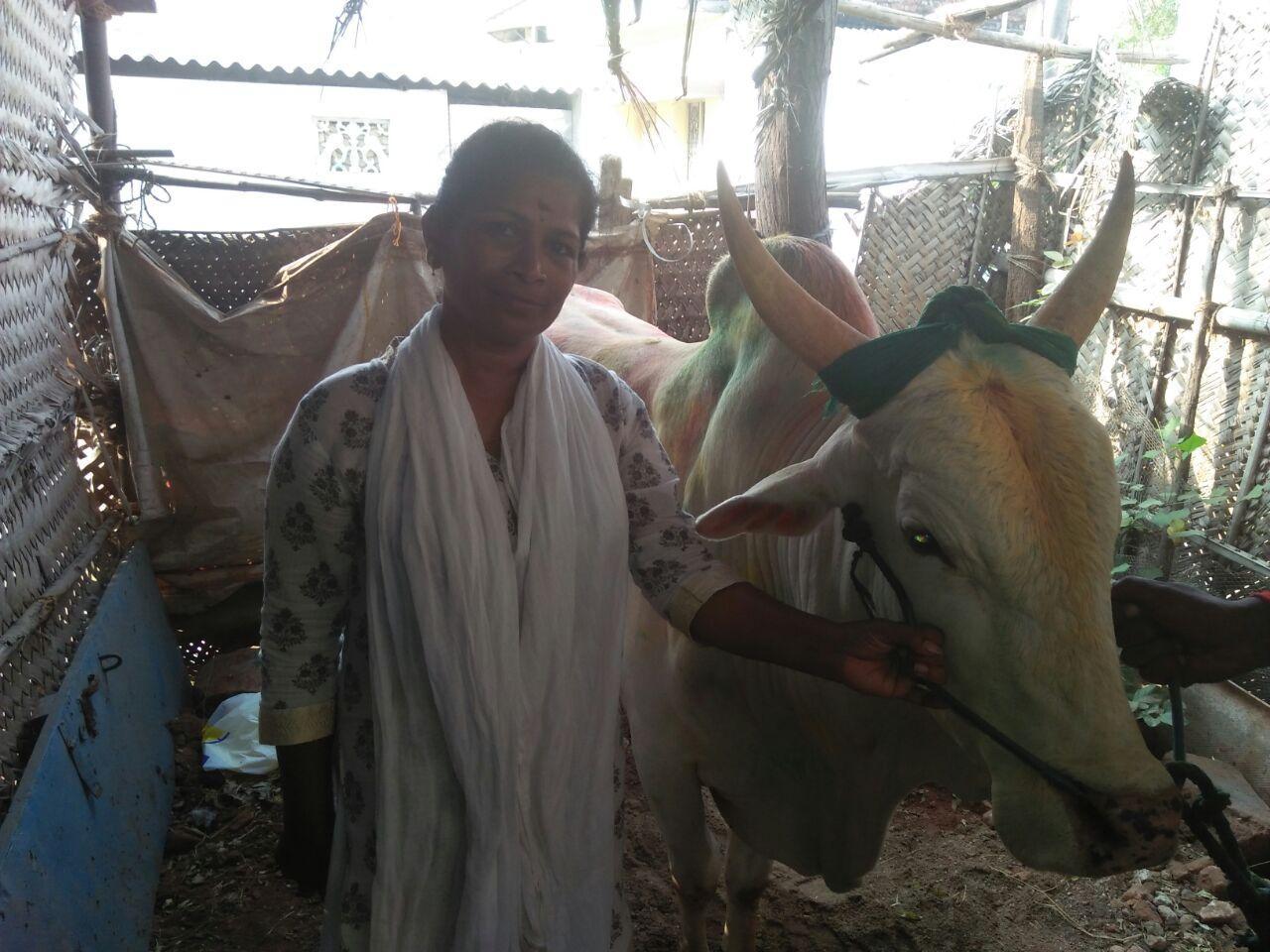 ஜல்லிக்கட்டு - கீதா