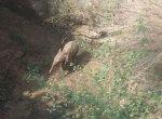 யானைக் கூட்டத்துடன் வந்த குட்டியானை கிணற்றில் விழுந்தது! 10 மணி நேரப் போராட்டத்துக்குப் பிறகு மீட்பு