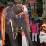 புத்துணர்வு முகாமுக்கு குதூகலமாகப் புறப்பட்ட ராமேஸ்வரம் கோயில் யானை ராமலட்சுமி!