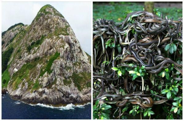 ஸ்னேக் தீவு - விலங்குகள்
