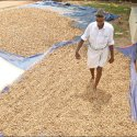 High Profit from Groundnut... ₹2 Lacs from 4 acres in 120 days!