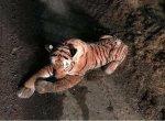 ஸ்காட்லாந்து போலீஸுக்குத் தண்ணி காட்டிய பொம்மைப் புலி... 45 நிமிட காமெடிக் கதை!