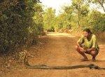 பறக்கும் பல்லி... கருந்தேள்... ராஜநாகங்கள்... அகும்பே - மினி அமேசான்! ஊர் சுத்தலாம் வாங்க பாகம் 13  #Agumbe