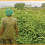 From farmer's land to vegetable market... Must know info about agri supply chain..! - Part 6