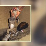 கொல்லப்படும் பல்லிகள்... கடத்தப்படும் ஆணுறுப்பு... எதற்காக? #AnimalTrafficking அத்தியாயம் 10