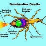 குண்டு போடும் வண்டு கற்பனையல்ல... நிஜத்திலும் உண்டு! #BombardierBeetle