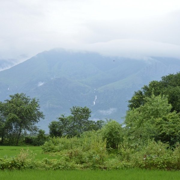 'சோலைக்காட்டுப் புல்வெளி!' - தென் இந்திய நதிகளின் தாய் #savegrasslands