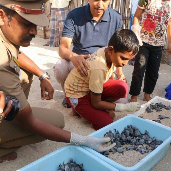 பொறிக்க வைத்தது 3,586 முட்டைகள்; வந்தது 125 உயிர்கள்! வாழ்வளித்த வனத்துறையினர்