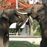 யானையை எங்க வேணாலும் பார்க்கலாம்... ஆனா, இங்க மட்டும்தான்...! கூர்க் - இந்தியாவின் ஸ்காட்லாந்து! ஊர் சுத்தலாம் வாங்க பாகம் 14 #coorg